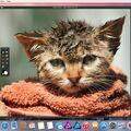 Скриншот 1 программы Affinity Photo