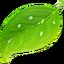 Иконка программы Coda