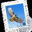 Иконка программы Apple Mail