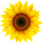 Иконка программы VideoPsalm