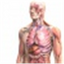 Иконка программы Zygote Body